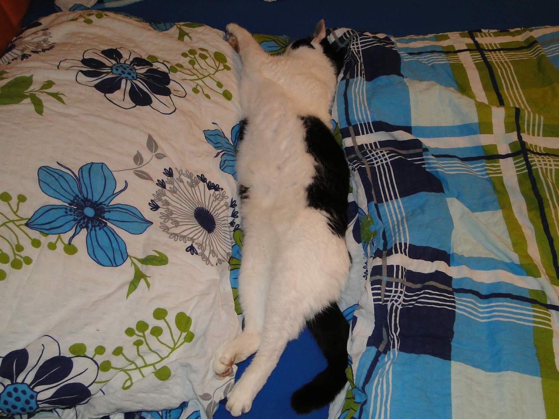 Hledejte kočku!:)) Maceška...