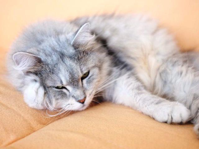 Hepinka nádherně ospalá...:))
