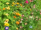Náhledový obrázek k článku BTW: Požehnané léto