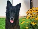Náhledový obrázek k článku BTW: Na delikátní téma aneb průjem u psů