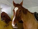 Náhledový obrázek k článku HOST DEDENÍKU – Klokanice: Čeho se koňák bojí
