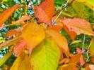 Náhledový obrázek k článku MATYLDOVINY: Barvy podzimu