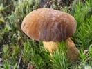 Náhledový obrázek k článku HOST DEDENÍKU – Jaroslav: Fotodeník – Na houby bez obav